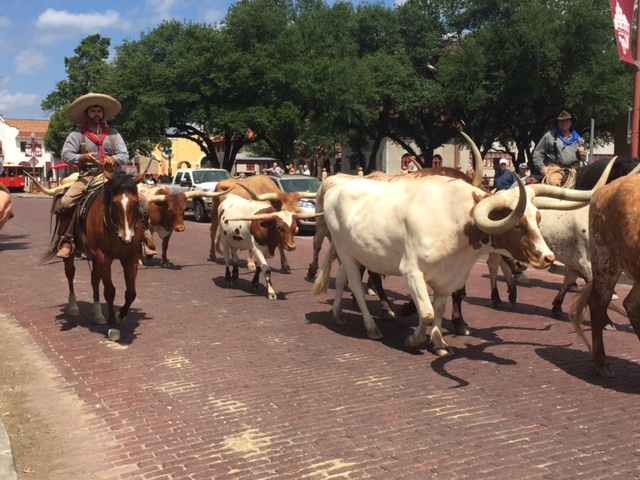 5 cattle drive